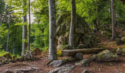 La Franc Maçonnerie du bois
